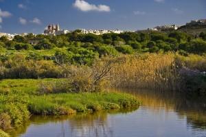 La Reserva Natural de Ghadira, uno de los santuarios de las aves en Malta. Foto de Ian Wright.