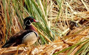 Malta ofrece un refugio y alimento a las aves migratorias.